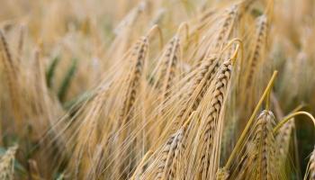 Sējas un pļaujas likumi garīgajā dzīvē