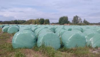 Pagarinātais zālāju pļaušanas un novākšanas laiks ļauj lauksaimniekiem atviegloti uzelpot