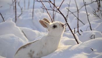 """Интересные факты про зайцев. Всё, что вы не знали о """"Животном года-2021"""""""
