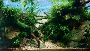 Акваскейпинг: аквариум как произведение искусства