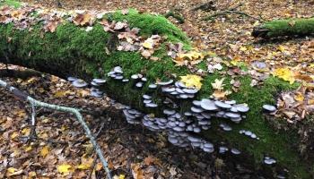 Kā atšķiras dažādas aizsargājamo dabas teritoriju formas