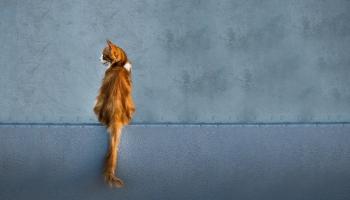 18. oktobris. Kosmosā dodas vēsturē pirmais kaķis