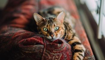 Saimnieki bieži neizprot murrātāja uzvedība: kaķi nekad nedrīkst sodīt