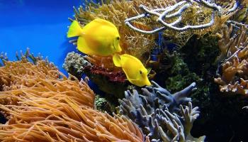 Морской аквариум в квартире: как создать собственное подводное царство?