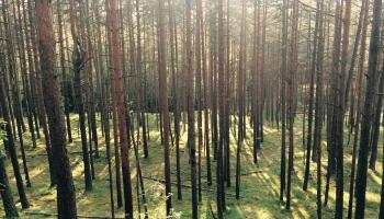 Burvju strēlnieks, Vīnes meža stāsti un citas labas lietas