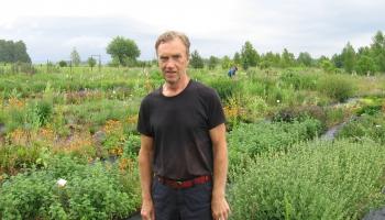 Limbažu muzeja direktors Jānis Ulmis audzē arī veselības augus
