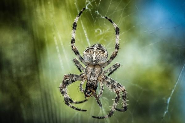 Kas ir zirnekļi? To dzīvesveids Latvijā