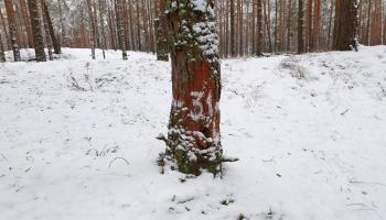 Daugavpils apkaimes mežā izveidots plašākais orientēšanās poligons Latgalē