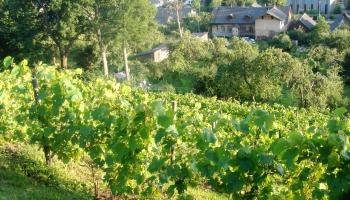 Sabiles vīna kalns