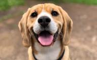 Kā adoptēt šķirnes suni no patversmes ārzemēs?