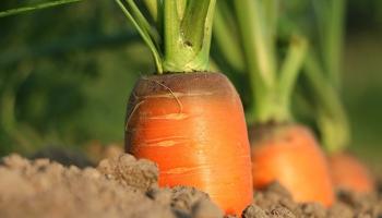 Чтобы красиво или вкусно? Нестандартные подходы к саду и огороду