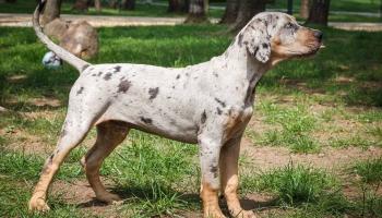 Редкие породы собак: плюсы и минусы