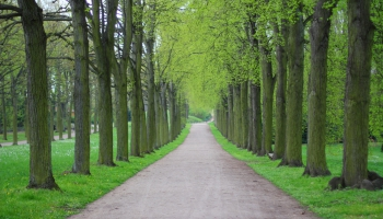 Деревья продолжают гибнуть. Как это предотвратить?