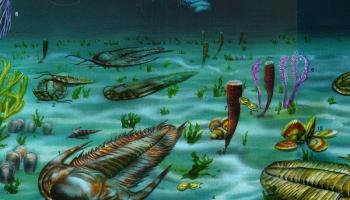 Кембрийский период, или Как началась жизнь на Земле?