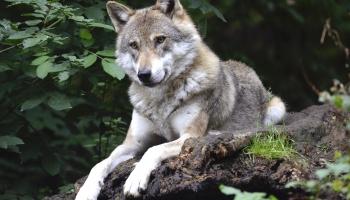 Животные, которых боятся