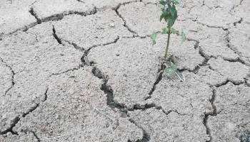 Засуха, жара, наводнения: наше климатическое будущее?