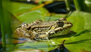 От повадок лягушек до чистоты воды: исследования молодых даугавпилсских учёных