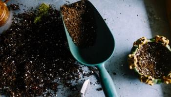 Mākslīgais intelekts dārzkopībā