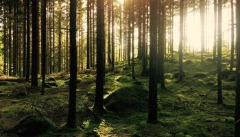 Новые нормы вырубки лесов отложат на полгода