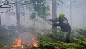 Andris Dulverks: drošība mežā gada karstajā laikā