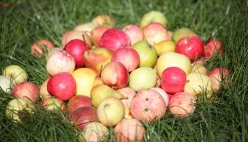 Pieaug pieprasījums pēc vietējiem augļiem un dārzeņiem