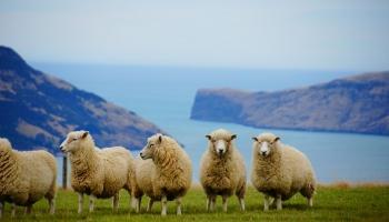 Дорогой рай: экс-рижане о жизни в Новой Зеландии