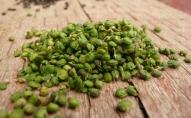 Latvijai raksturīgu augu šķirņu saglabāšana. Vērts pašiem ievākt sēklas!