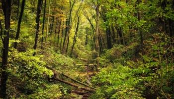 Par mežu ir jārūpējas: svarīgi zināt, kas notiek tavā mežā