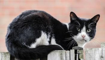 Как найти управу на соседа-«вредителя»