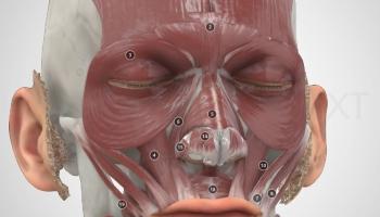 Anatomy Next: кадавры руками латвийских художников