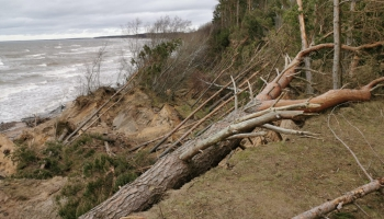 Nobrucis Labraga stāvkrasts Jūrkalnē. Izskalots Daugavgrīvas krasts Lielupes ietekas jūrā