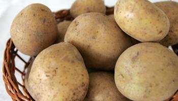 Latvieša iecienītākais ēdiens - kartupelis