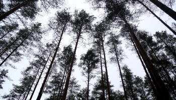 "Eduards Kašs. ""Meža noslēpums"""