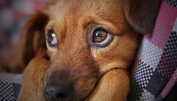 Мы в ответе за тех, кого приручили: как выживают латвийские приюты для животных