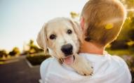 Suni var mācīt jebkurā vecumā: Ja neaudzina suni, viņš nav laimīgs