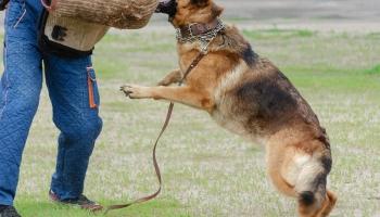 Провести время вместе со своей собакой: ИПО