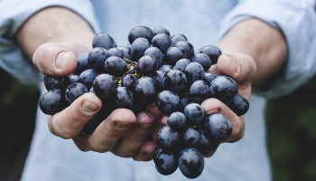 Чем богаты, тем и рады: виртуальный винный тур по Грузии