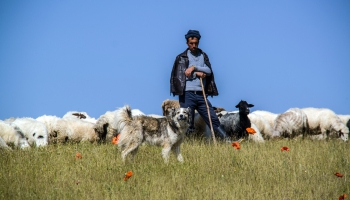 Человек и его собака: Пастушья служба