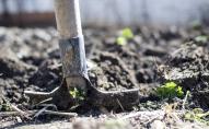Lielie rakšanas un mēslošanas darbi jeb dārza darbi septembrī