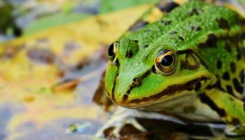 Биомимикрия. Подражая природе