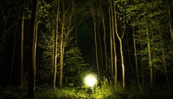 """Roberts Kleinbergs. """"Meža noslēpums"""""""