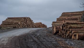 Latvijas kokrūpnieki ceļ trauksmi par banku lielo piesardzību darījumos ar Baltkrieviju