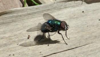 Назойливые насекомые: как спастись от их укусов