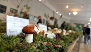 Mikoloģe Ivita Daniēla par ikgadējo sēņu izstādi Latvijas dabas muzejā