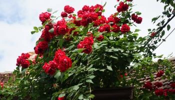 Dārza darbi: jūlija sākumā var arī nedaudz paslinkot, bet dārzu nevajag aizmirst