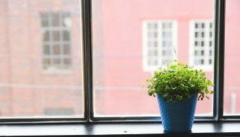 Комнатные растения: ваши друзья и ваши враги