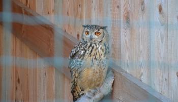 Вблизи Даугавпилса открыт новый частный мини-зоопарк