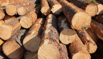 Mežu uzturēšana: kas jāzina, ja īpašumu šķērso elektrolīnija