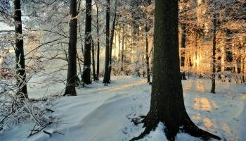 Muzikāls ceļojums pa mežiem Latvijā, Čehijā un aiz okeāna