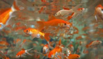 Мастер-класс для аквариумиста: чтобы ваше подводное царство не болело